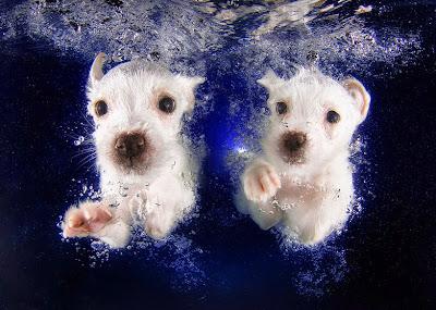 Fotografía de cachorros bajo el agua