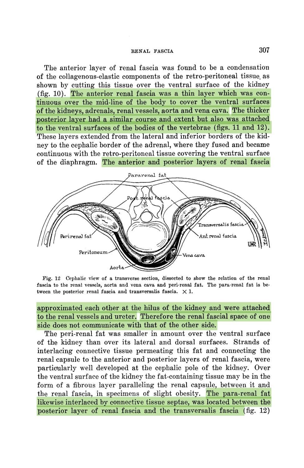 Cuadernos de Anatomía Quirúrgica: The renal fascia and its relation ...