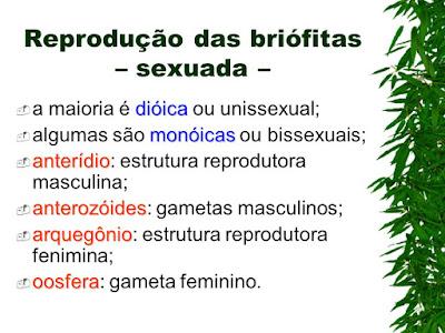 Briófitas: Introdução
