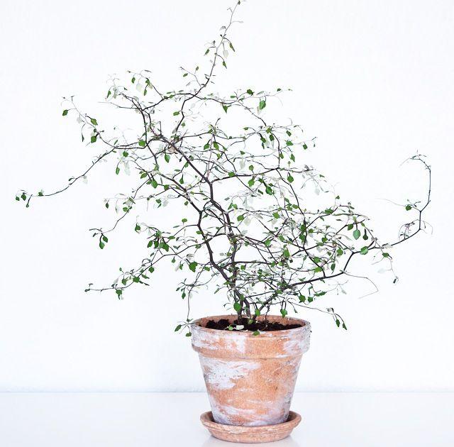 najmodniejsze rośliny do domu