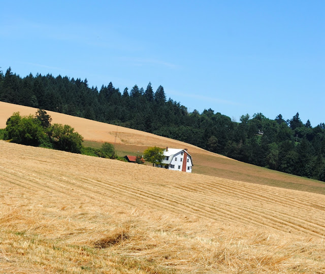 Lone farmhouse at Stoller Vineyard, Oregon