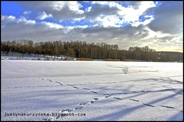 Staw zamarznięty zima katowice zdjęcia