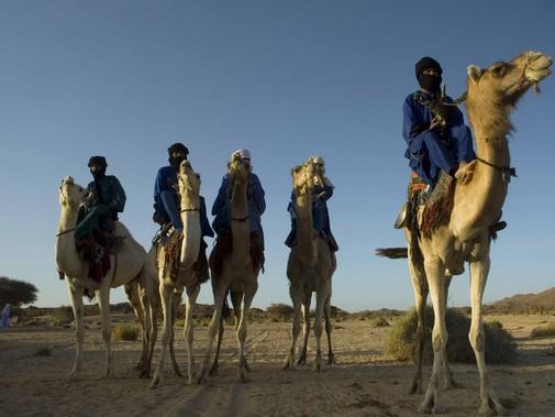 Cammelli Deserto Sahara