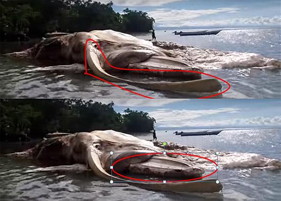 Misteriosa criatura gigante morta em  ilha da Indonésia 2