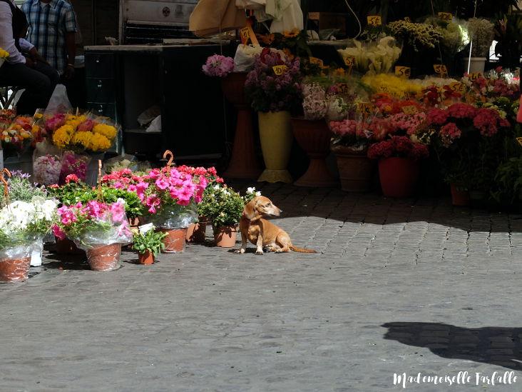 marché campo de fiori