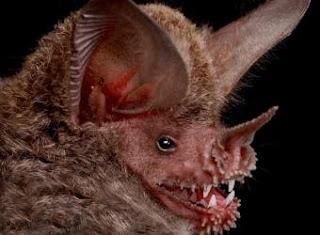 Rostro del murciélago