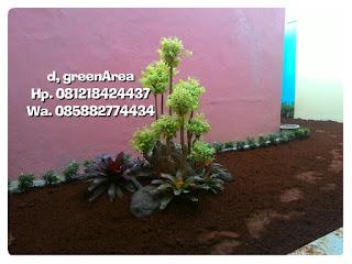 jual murah pohon bonsai anting putri harga murah dan bebas ongkos kirim