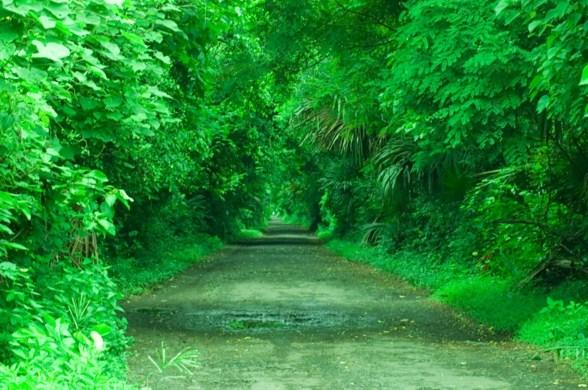Hutan Ever Green Baluran