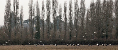 cigognes à Cheverny