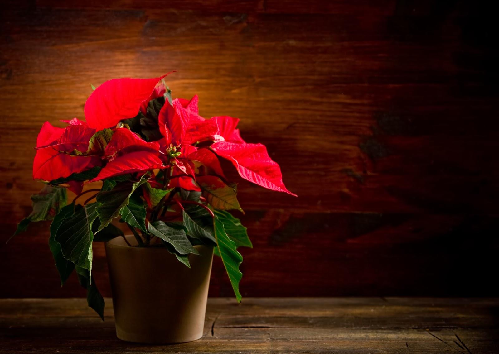 Banco De Imágenes Gratis 20 Imágenes De Nochebuenas