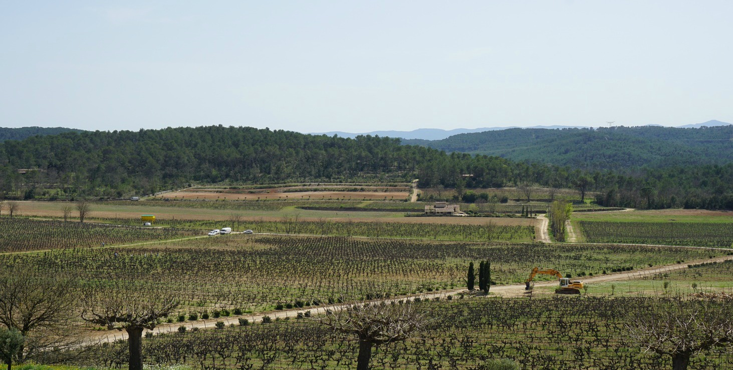 Vineyards of Chateau Roubine