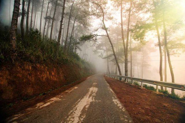 Top 10 con đường NGÀN THÔNG REO ở Đà Lạt 'níu chân' du khách   Thông Tin Đà  Lạt