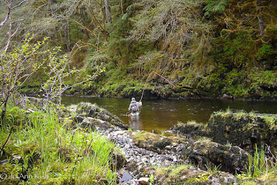 Angler casting for steelhead in Southeast Alaska