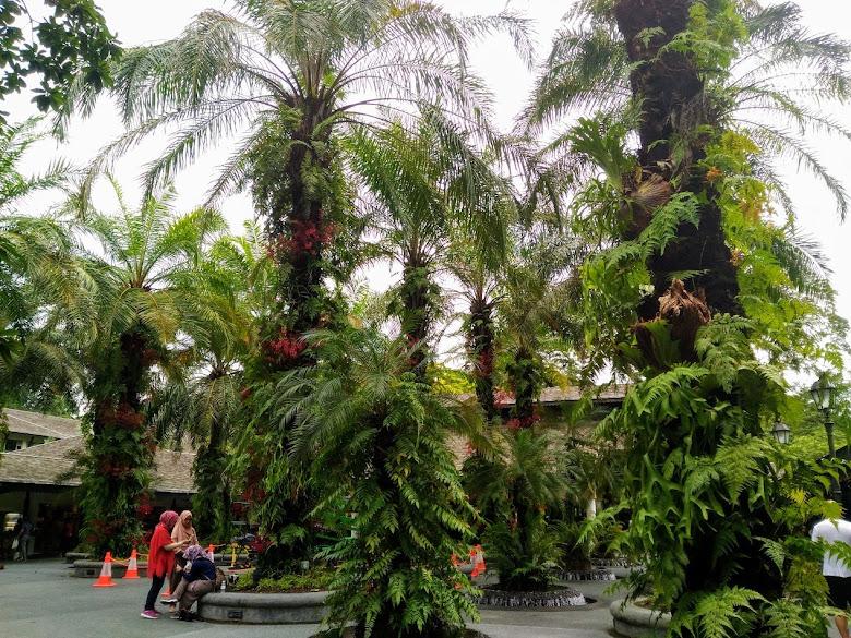 新加坡植物園內的休憩區