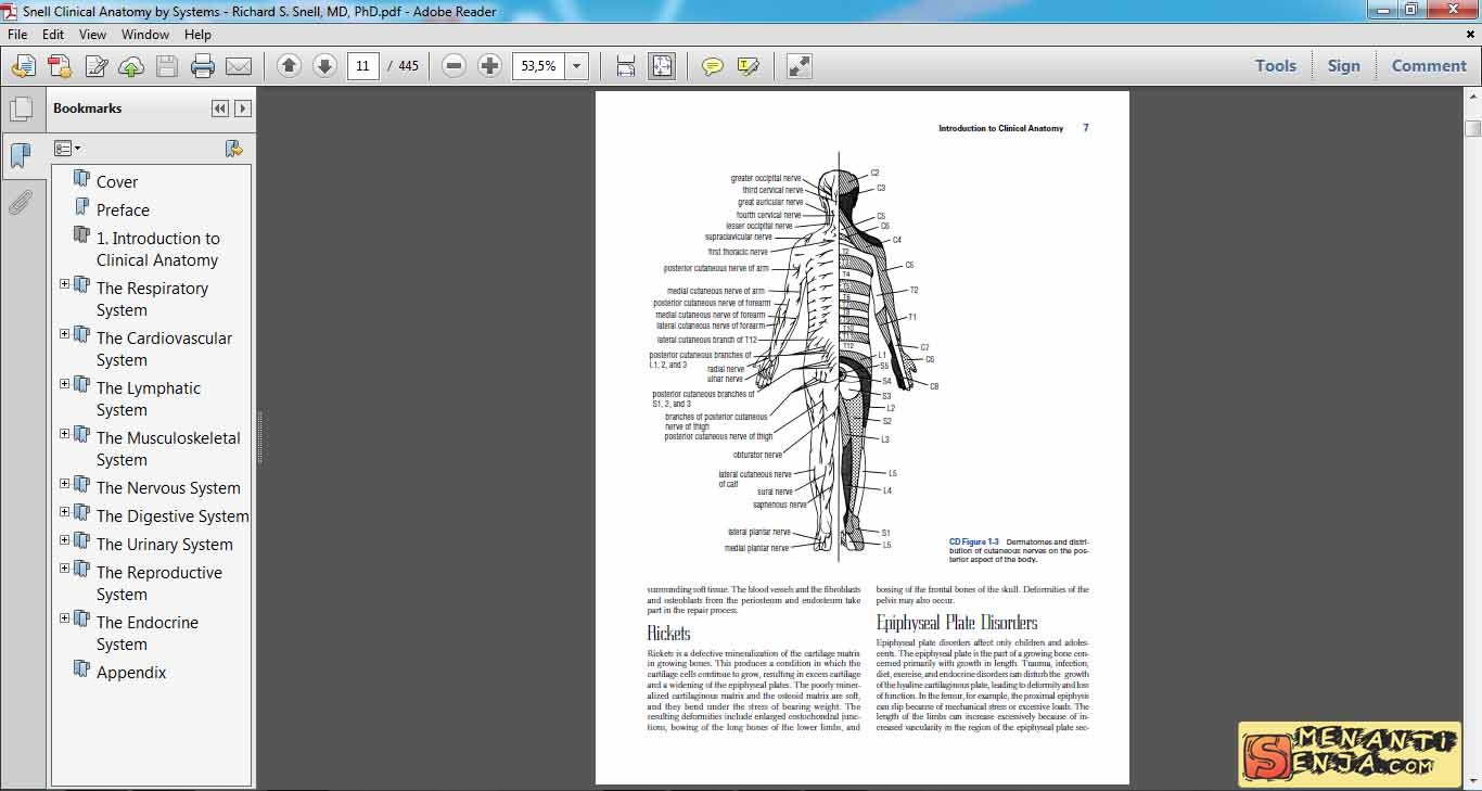 Amazing Snell Clinical Anatomy Gallery Human Anatomy Images