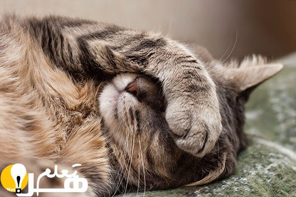 446ec7314 حقائق و معلومات غريبة وعجيبة عن القطط: