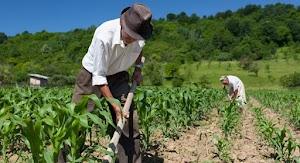 Reforma da Previdência propõe idade mínima de 60 anos na aposentadoria rural