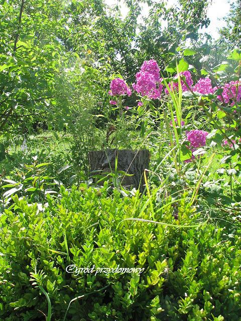 obornik w ogrodzie, ogród przydomowy, ogród za grosze