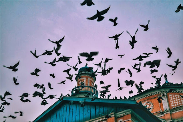 kabul city travel soul afghanistan mosque birds