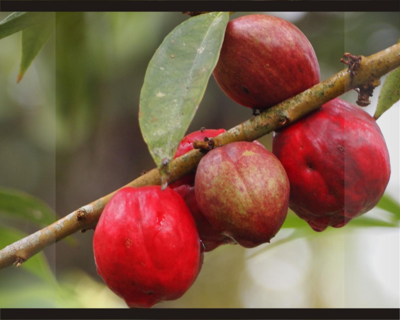 obat herbal wasir eksternal