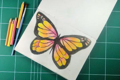 How to Drawing Butterfly Using Watercolour Pencil : Menggambar Kupu-Kupu Menggunakan Pencil Warna Watercolour