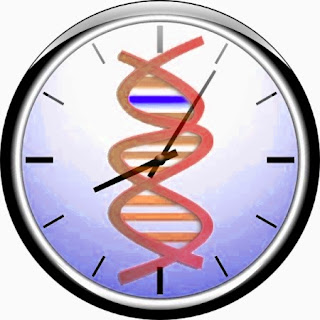 Genetic clock research supports the biblical creation science timeframe.