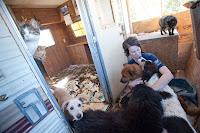 Animal Hoarding News & Info: Mary Port - St. Johns, Arizona