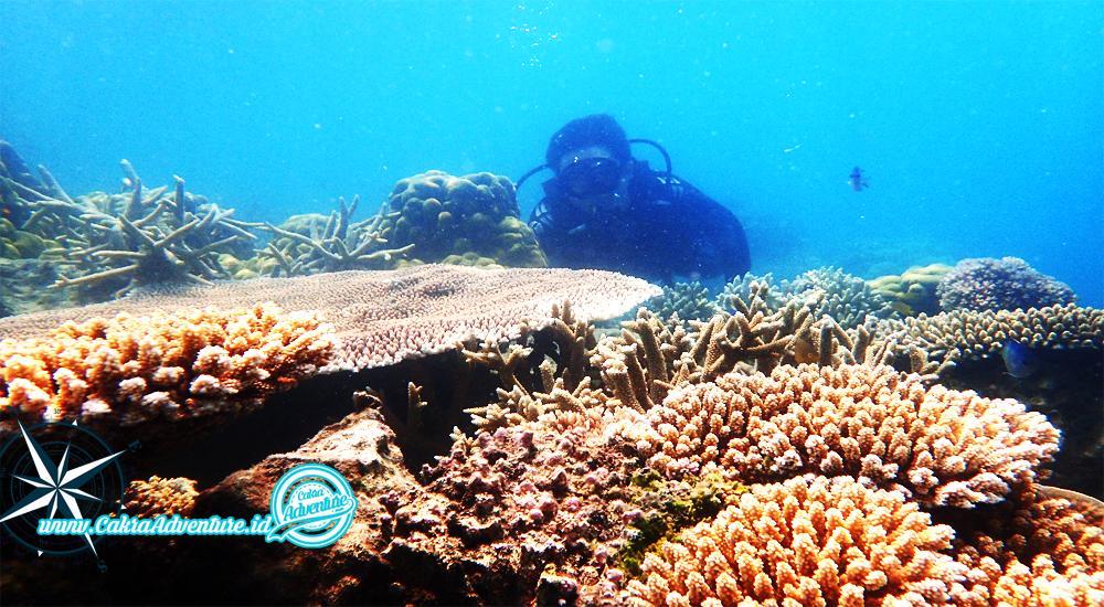 open trip dan private trip pulau seribu