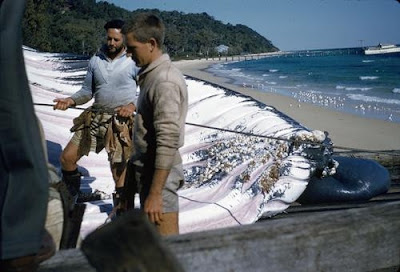 whale carcass at Tangalooma Whaling Station, ca. 1957