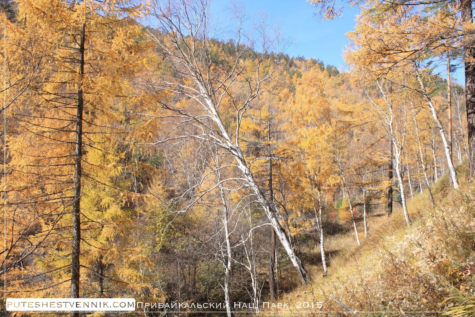 Осенний лес Прибайкалья