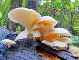 Reproduksi Jamur (Fungi) Vegetatif dan Generatif