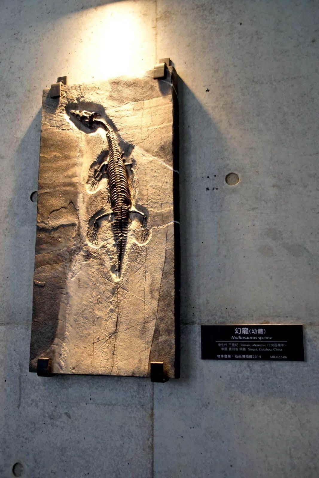 [台南][左鎮區] 台南左鎮化石園區(上)|自然史教育館、故事館|遊記
