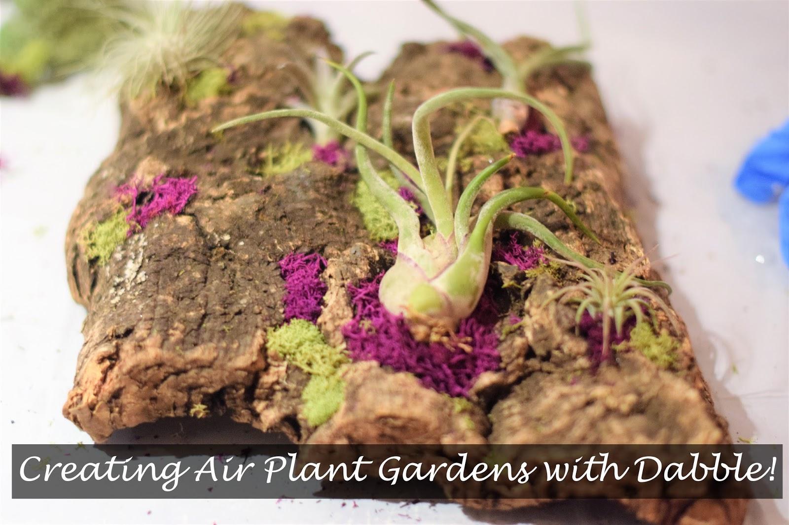 garden Archives - Floradise