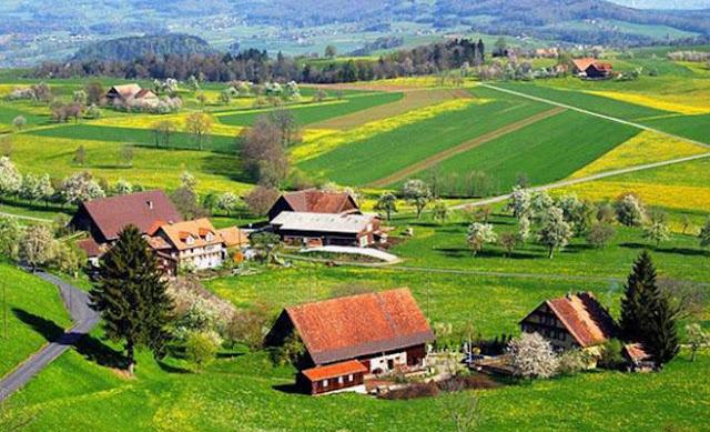 القرية - بحث