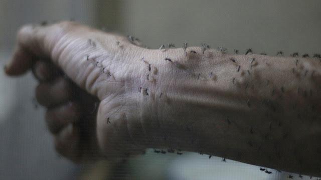 España en la mira de el mosquito que transmite el virus del Zika