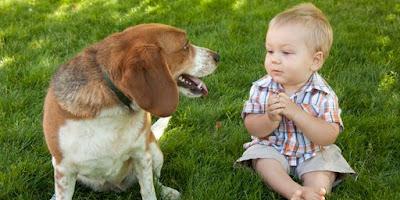 Tawadhuk Antara Anjing dan Manusia