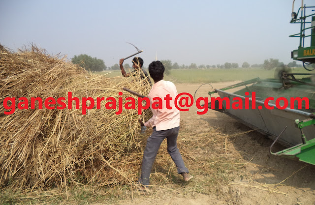 Guar seed and Guar gum prices have stuck in whirlpool of crude oil , Guar, guar gum, guar price, guar gum price, guar demand, guar gum demand, guar seed production, guar seed stock, guar seed consumption, guar gum cultivation, guar gum cultivation in india, Guar gum farming, guar gum export from india , guar seed export, guar gum export, guar gum farming, guar gum cultivation consultancy, today guar price, today guar gum price, ग्वार, ग्वार गम, ग्वार मांग, ग्वार गम निर्यात 2018-2019, ग्वार गम निर्यात -2019, ग्वार उत्पादन, ग्वार कीमत, ग्वार गम मांग, Guar Gum