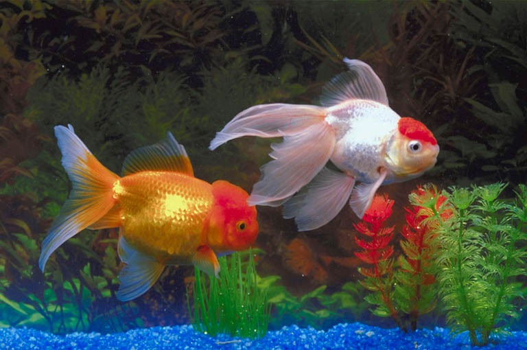 Popular Types Of Freshwater Aquarium Fish Best Living Home Inspiration