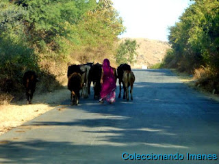 De Udaipur a Jodhpur