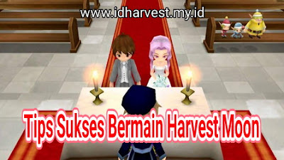 Tips Sukses Bermain Harvest Moon Seri Apapun
