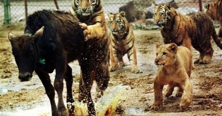WWF: Ο πλανήτης μας έχασε το 60% του πληθυσμού των άγριων ζώων μέσα σε 40 χρόνια