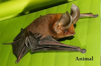 10 most bizarre Bats