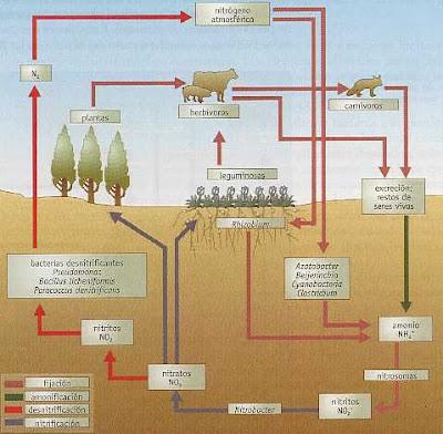 ciclos biogequimicos