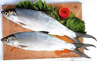 h sejenis ikan air tawar atau air payau d Kabar Terbaru- MANFAAT DAN CARA MENGOLAH IKAN BANDENG