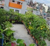 Roof Top Farming -- Vegetables in RoofTopFarming