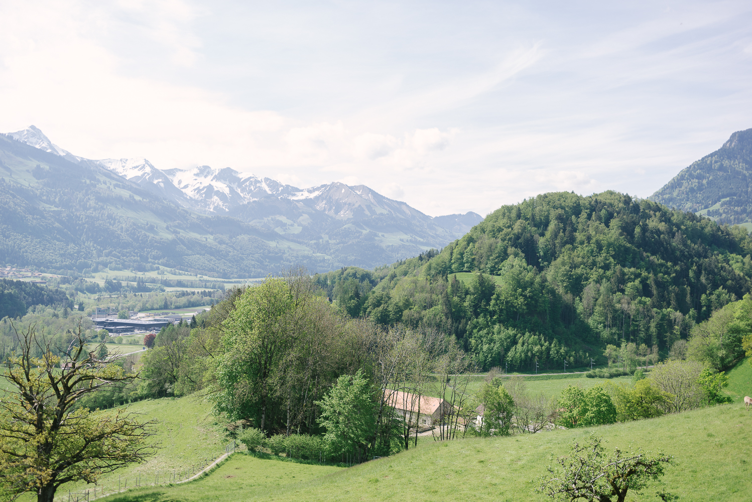 Beautyosuaurs Lex-Alex Good-Lifestyle Blog-Travel-Gruyere-Switzerland-AlexGoodTravels-Spring