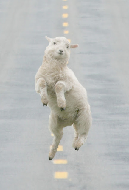Adorable prancing woolly lamb hopping down street Easter decor inspiration