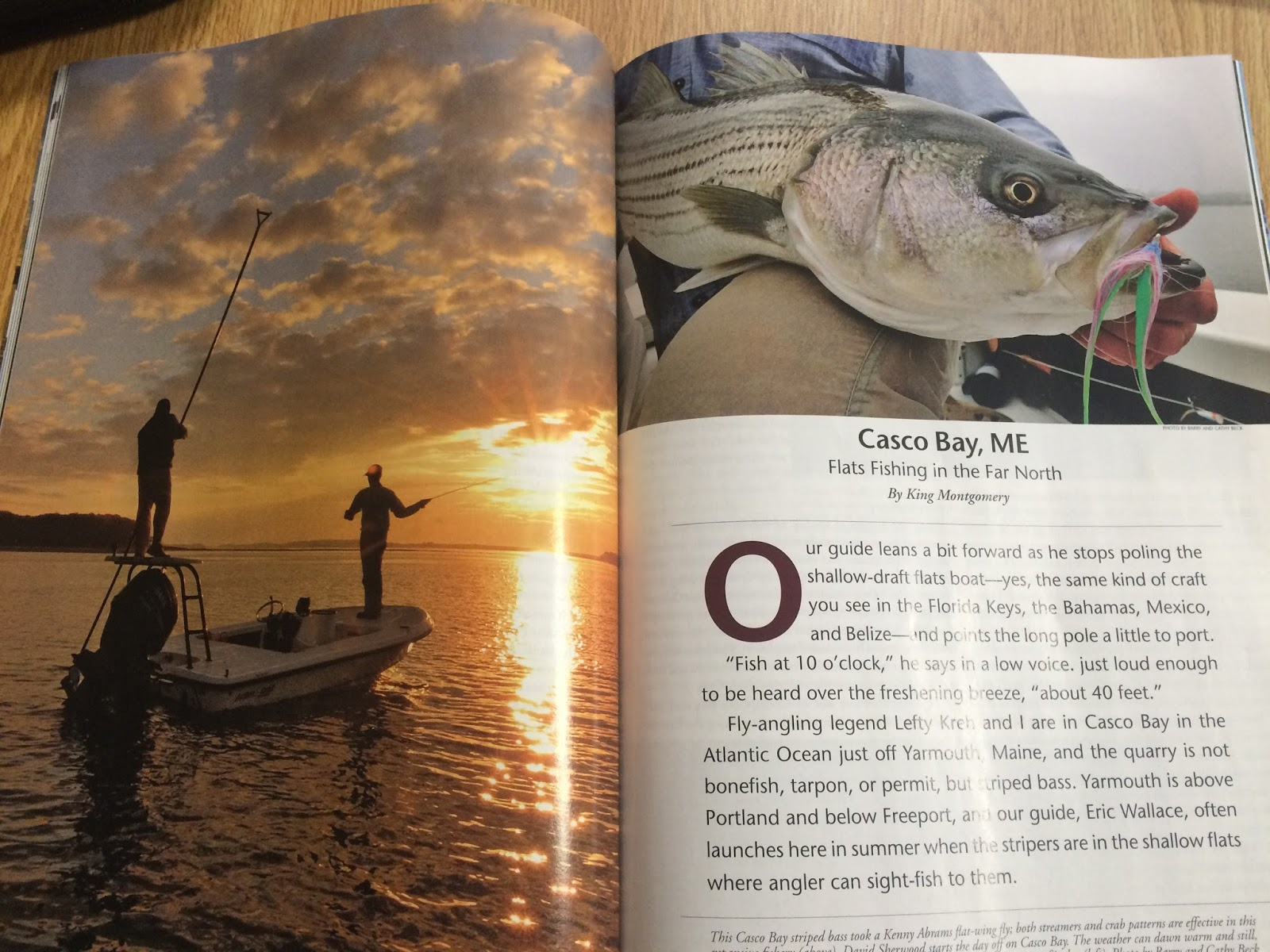 Maine striper fishing reports for Eastern fly fishing magazine