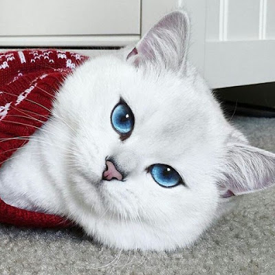 Beberapa Manfaat Ketika Melihat Video Kucing 2