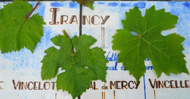 wijntourisme bourgondie, oenotoerisme bourgondie, aoc irancy, bourgondische wijnen, aligoté, césar, pinot noir